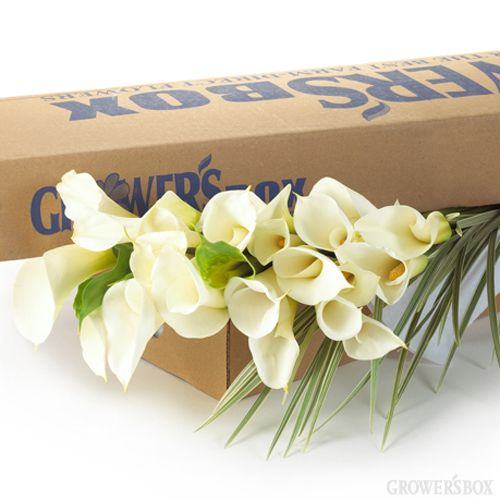 Using wholesale flowers for weddings and events is a great way to save money and leave your unique signature on your wedding and event decorations! The Grower's Box offers a fantastic selection of combo packages of wholesale flowers paired together with fresh cut fillers and greens at discount prices. Shop online and save at www.GrowersBox.com.Fresh Cut, Wholesaling Flower, Calla Lilies, Lilies Green, Flower Shops, Growers Boxes, Wedding Flowers, Growersbox Com, Diy Wedding