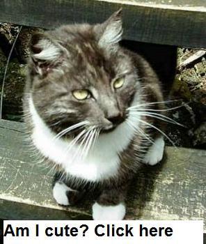 7 Best Cat Urine Odor Removal Images On Pinterest Cat