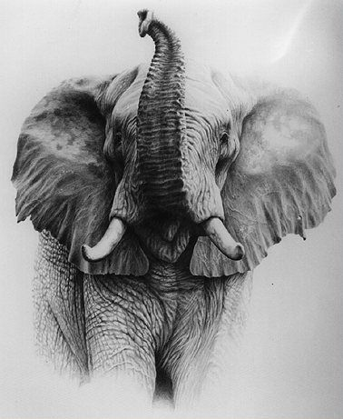 Good drawing of elephant with its trunk up.