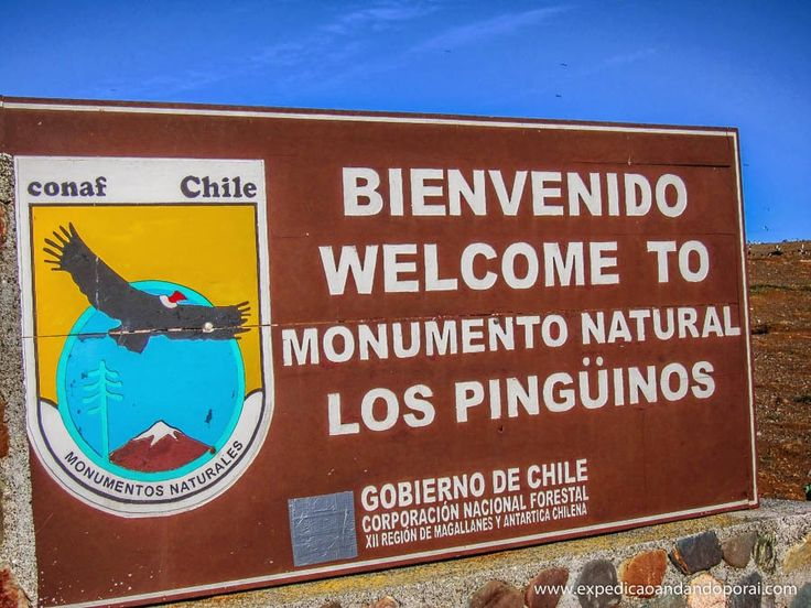 EXPEDIÇÃO ANDANDO POR AÍ...: Punta Arenas: Isla Magdalena (pinguinera) e Isla M...