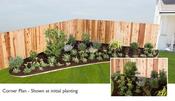 California native plant package northern southern for Low bushes for landscaping