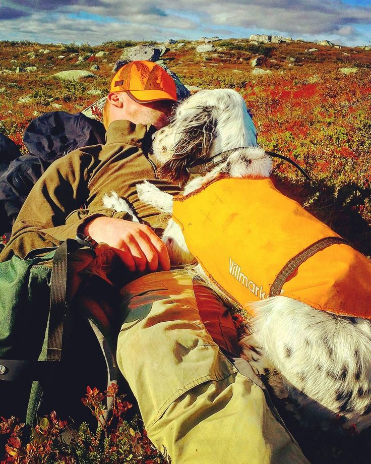 Grousehunting in august is amazing the weather is warm and the days are long perfect for taking a nap :) #hunting #grousehunting #norway #bergansofnorway #vikingfootwear #englishsetter #pointingdogs #autumn #pictureoftheday#cal12 #nordichunter #rottweil #shotgun #rypejakt #jagt #jakt #gunlife #outdoorlife #beretta #nordichunter #hunting_the_wild #snslifestyle #mittjaktblad #nordichunter #swe_hunters #fjellreven by jegerbataljonen