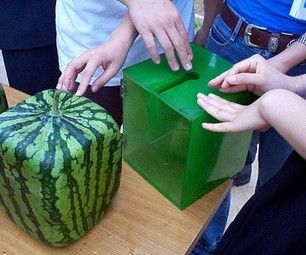 Grow a square watermelon. This is really, really easy to do. (Note: you may be able to use this technique to grow other stuff in the form of a square ( actually in the form of a cube) and apply the general idea to other shapes.)