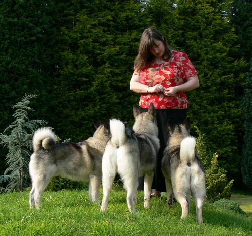 fluffy bums. #elghund, #elkhound: Photo, Love My Dog