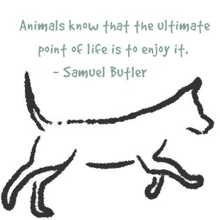 """""""Animals know that the ultimate point of life is to enjoy it."""": Enjoying Living, Dogs Quotes, Pet Dogs, Animal Quotes, Quotes About Dogs, Pet Sit, Quotes Dogs, Pet Quotes, Enjoying Life"""