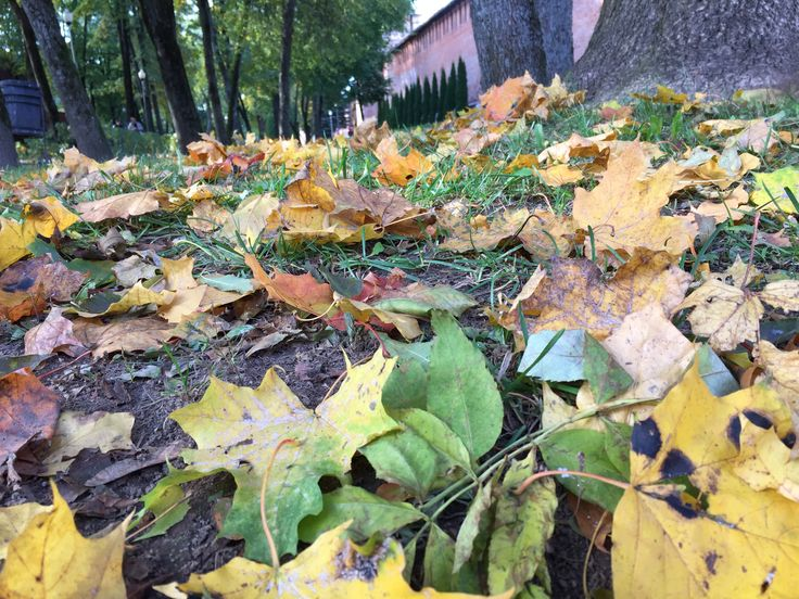 Autumn leaves come falling down  Red orange yellow brown down down............🍃🍃