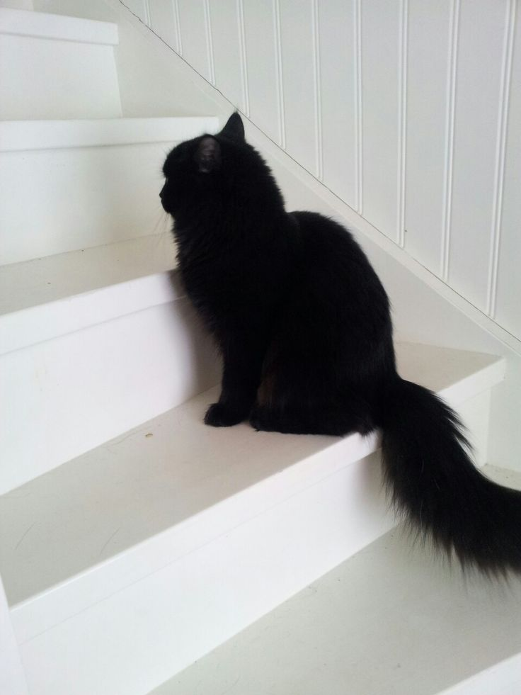 """""""No, I not look at you, your image trapper might steal my soul""""! Beautiful black cat <3"""