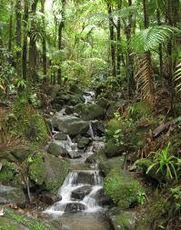 Desconocidos incendiaron alrededor de medio kilómetro del cerco perimétrico del sector Palería del santuario histórico Bosque de Pómac, ubicado en la ...