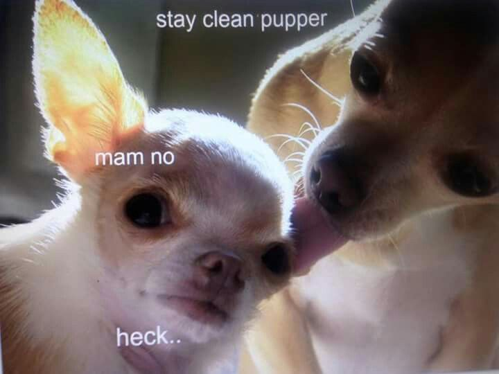 33212ab078d478f716a617a24fef67d2 animal babies funny animals 105 best bork images on pinterest cool things, funny stuff and