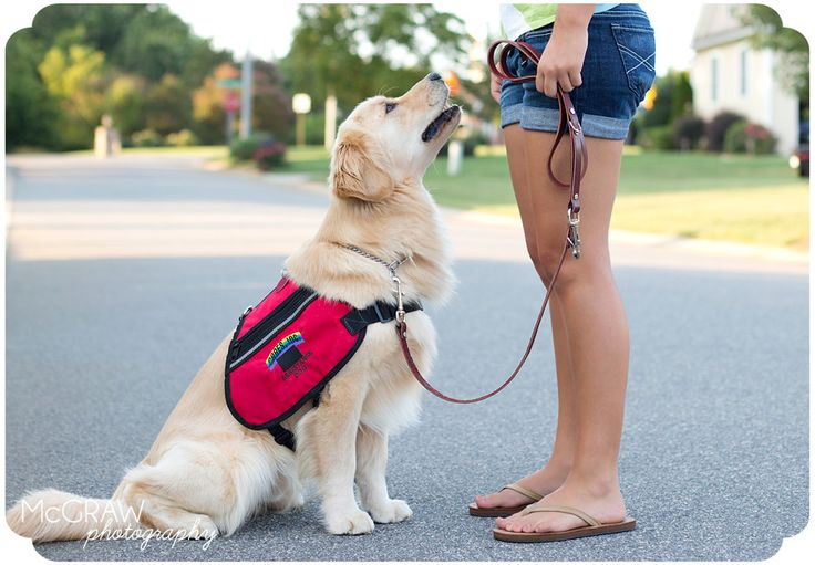 Diabetic Service Dog Photography