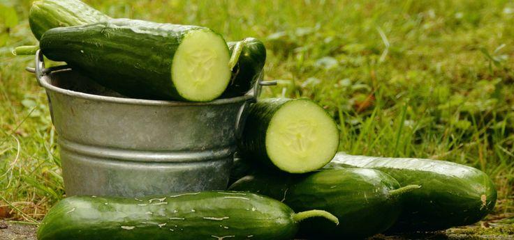 Les 25 meilleures id es de la cat gorie cornichon concombre sur pinterest cornichons au four - Comment planter des concombres ...