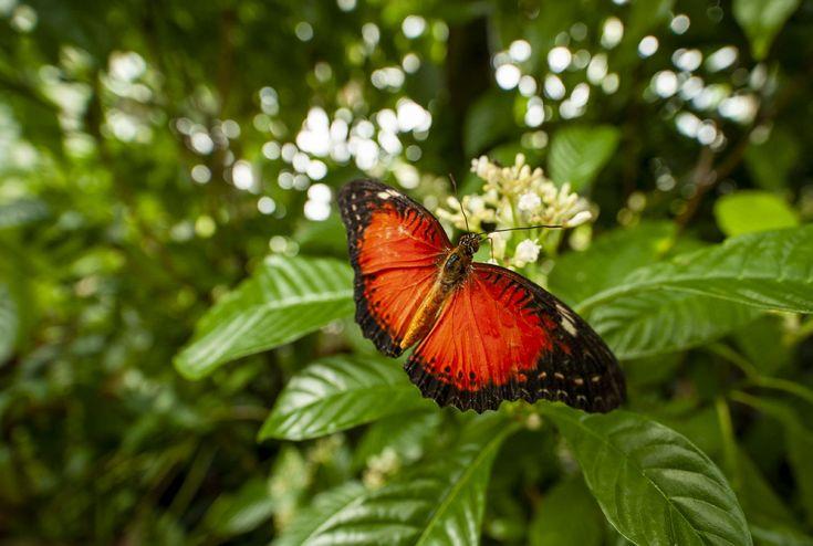 Butterfly Rainforest Rainforest Butterfly Exhibit Poisonous Plants
