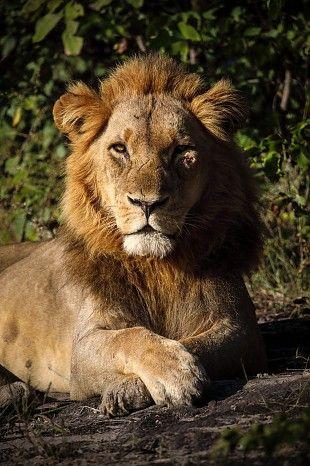Regal Botswana beauty