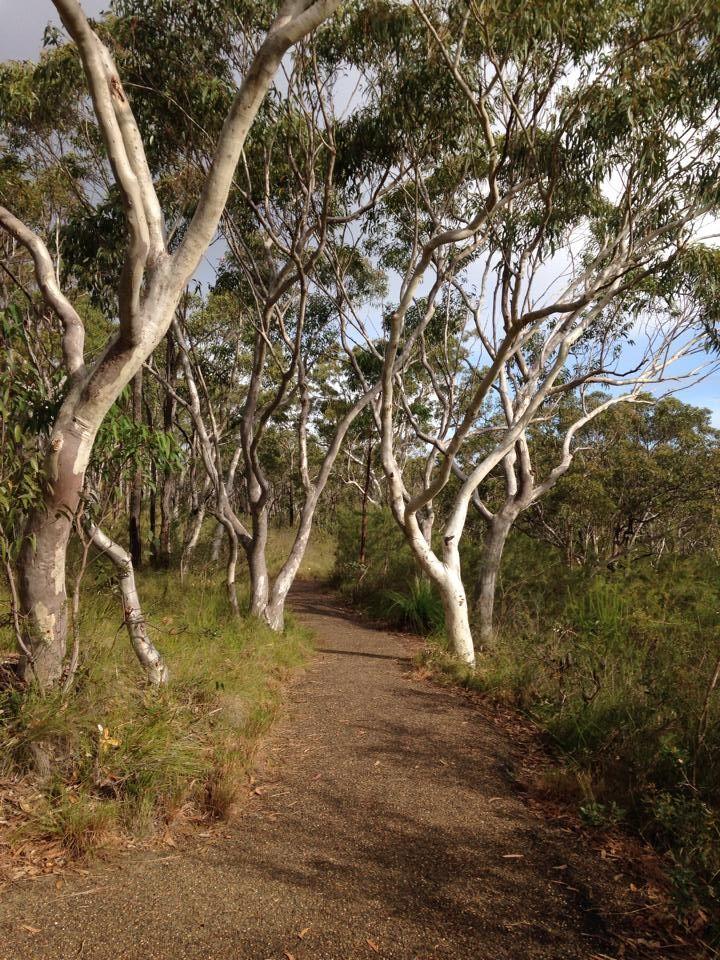 Brisbane Water National Park. Easy bushwalks.