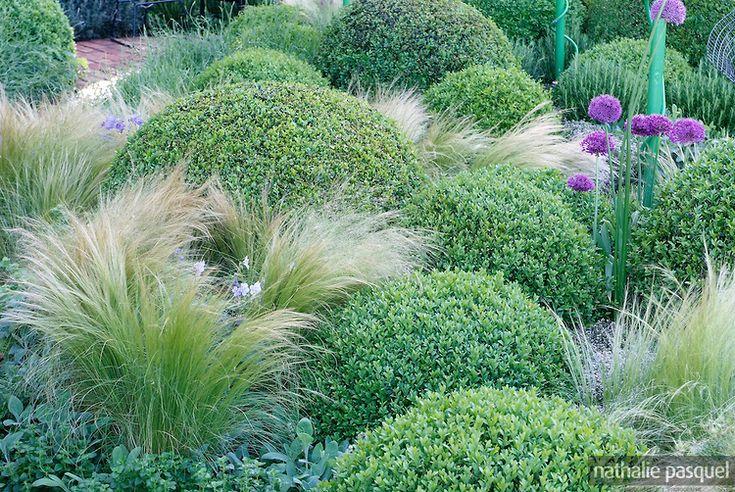 Massif vert, Topiaire, Nassella tenuissima (Stipa), Buxus sempervirens (buis), forme boule, Allium 'Purple Sensation', Designers : Diarmuid ...