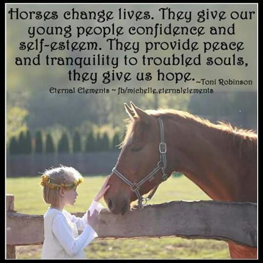 339 best Great Horse Quotes (Group Board) images on ...