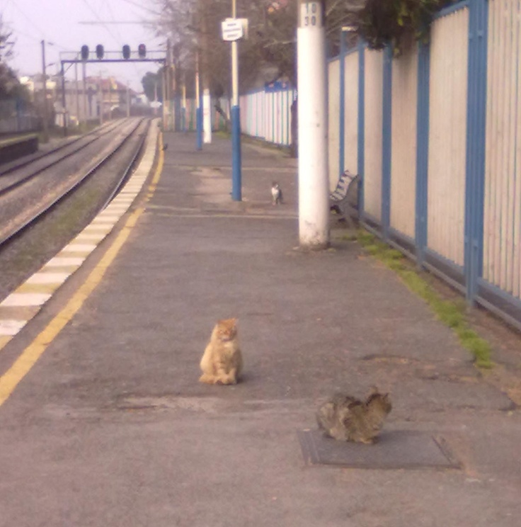 Railway Cats