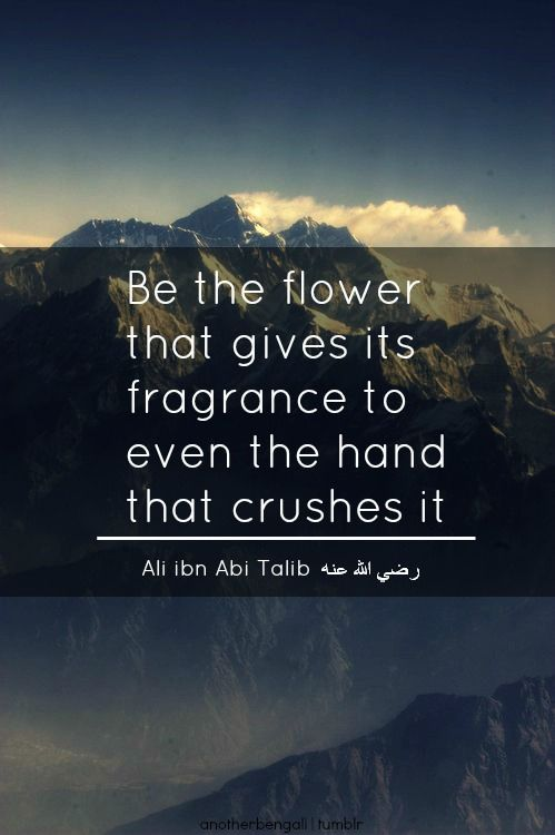Flower, tolerance, forgiveness, islamic wisdom
