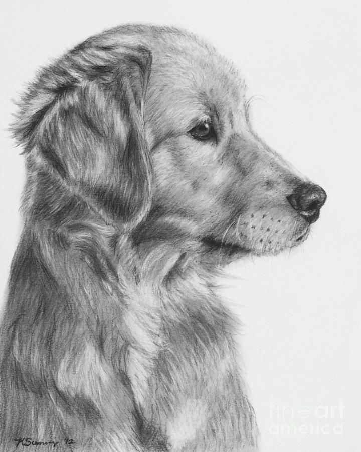 Golden Retriever Puppy In Charcoal One by Kate Sumners