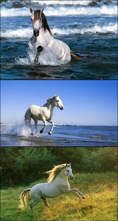 ●•●•●•●•●•● Animals ●•●•●•●•●•●