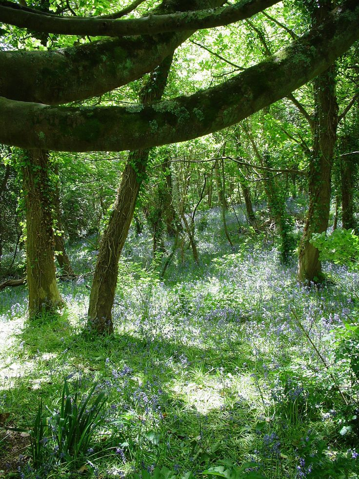 Forested glade in Guernsey, Channel Islands