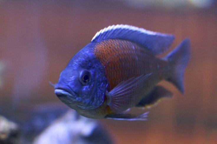 Best Fish for a 10-Gallon Tank Setup https://pethelpful.com/fish-aquariums/Best-Fish-for-10-Gallon-Tank