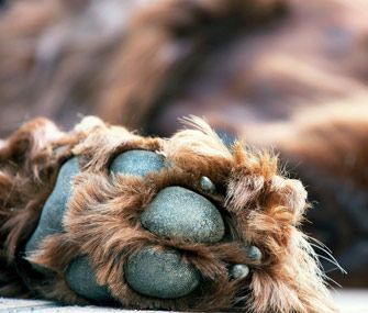 Keep an eye on your dog or cat's broken toenails. Dr. Ann Hohenaus warns that a broken toenail or painful toe could indicate something serious, like cancer.