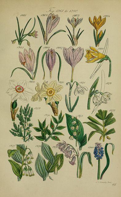 BioDivLibrary, Welcome to my gardening blog http://www.facebook.com/flowerindoorgardening #flower