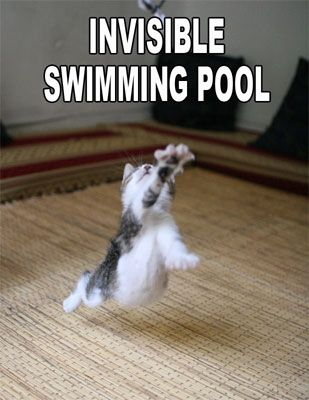 007894-funny-animal-sayings-wallpaper-cat-invisible-swimming-pool.jpg (309×400)    OH YAH BABY! IM SWIMMING ON LAND!