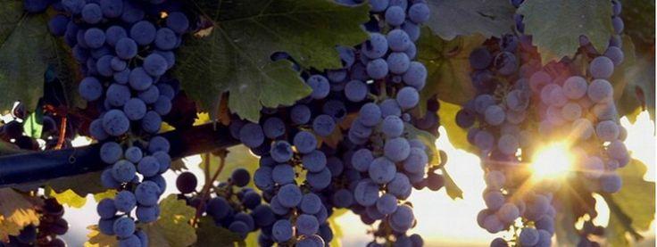 Valle de Guadalupe -  ruta del vino Ensenada Mexico