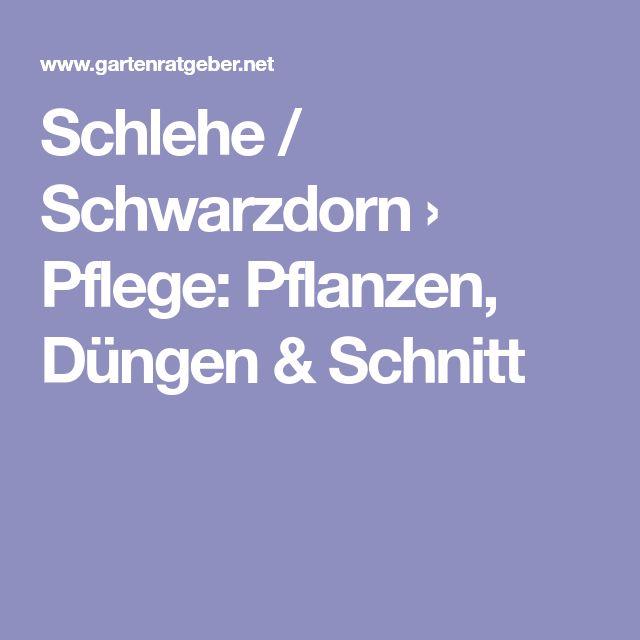 Schlehe / Schwarzdorn › Pflege: Pflanzen, Düngen & Schnitt