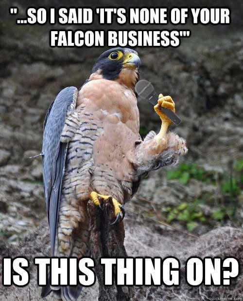 ...: Falcons, Funny Stuff, Funnies, Humor, Funny Animal, Photo