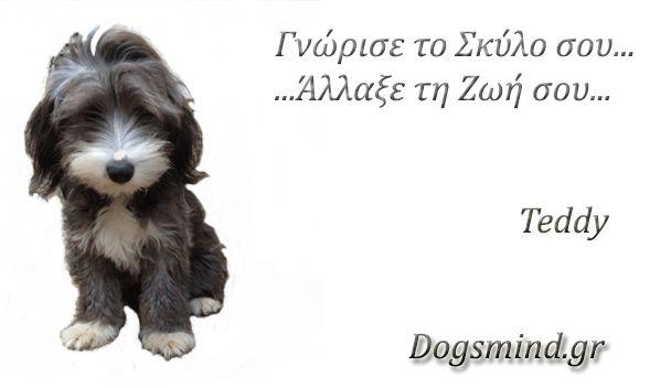 """Πως να επιλέξω σκύλο; Υπάρχουν δυο τρόποι να επιλέξεις τον σκύλο σου. Ο ένας είναι να βασίσεις την επιλογή σου στο να μην χαλάσουν οι ισορροπίες της ζωής σου, γεγονός που είναι απόλυτα σεβαστό και ο δεύτερος...να επιδιώξεις την """"αλλαγή"""". Στην πρώτη εκδοχή είναι"""
