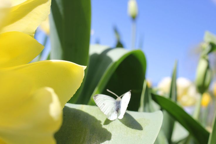 Floriade is Australia's biggest celebration of spring.