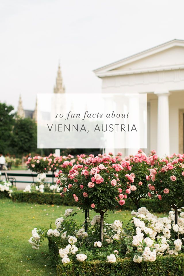 Best 25 fun facts about germany ideas on pinterest for Austrian cuisine history