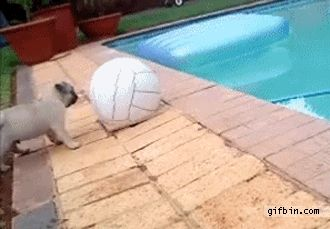 50 GIFs of Dogs Making Complete Fools of Themselves