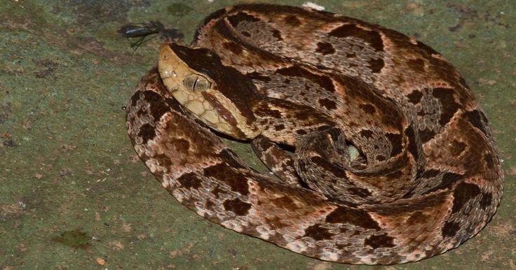Serpiente talla equis