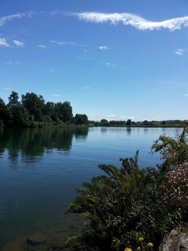 El rio en Valdivia