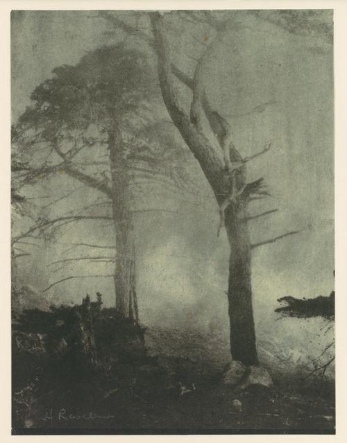 swampy: Gum Bichrom, Alternative Photography, Bichrom Photography, 1910S Medium, Bichrom Prints, Landscape Art, Cypress Trees, Photographers Prints, Henry Ravel