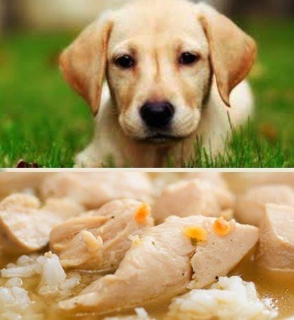 Zuppa di riso con pollo e carote - Ricetta per Cani