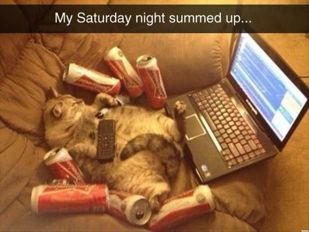 Funny Cats - How To Spend Saturday Night (272 Pics)
