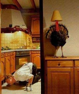 LOL!!! This is classic! #yankinaustralia #thanksgiving #turkey