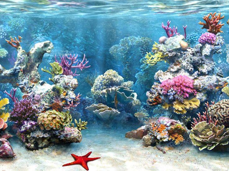 Marine National Park, Marine Wildlife Sanctuary - in Gujarat, India