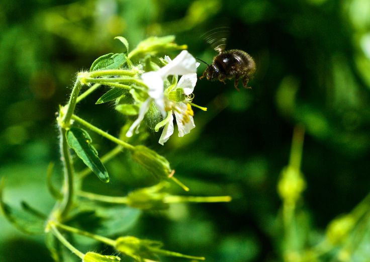 Photographer Pernille Westh | Bumle bee and flower · Get my 7 FREE basic photography tips - you need to know! http://pw5383.wixsite.com/free-photo-tips