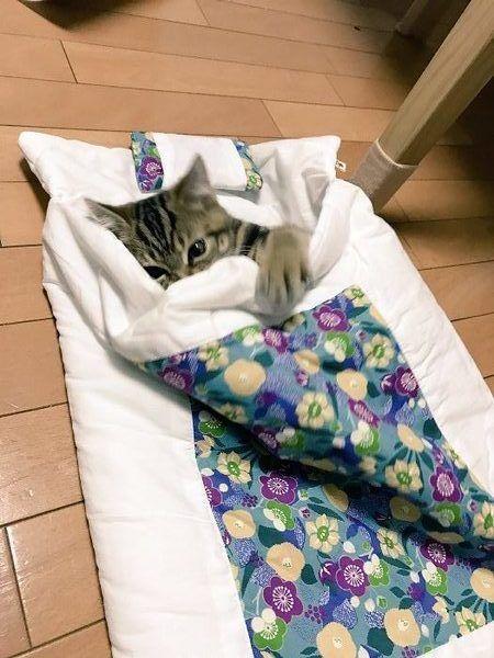 猫専用だニャ! ちっちゃいお布団になじんだ猫ちゃんがカワイイ