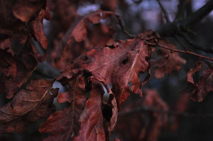 old oak forest by Marius Fechete on 500px