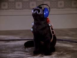 Salem Saberhagen/Gallery - The Sabrina the Teenage Witch wiki - Your Reliable Guide to the Spellbinding Sitcom!