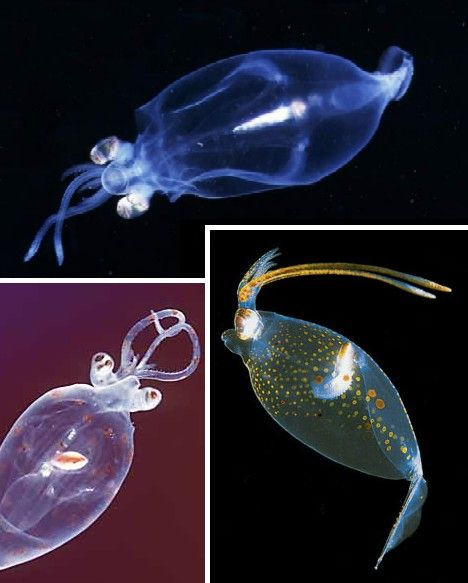 Clearly Beautiful: 10 Amazing Transparent Animals - WebEcoist