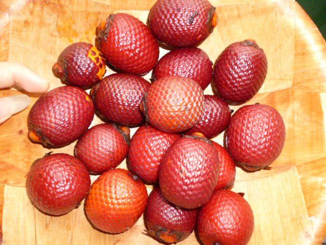 #Buriti (Mauritia flexuosa L.) fruto silvestre