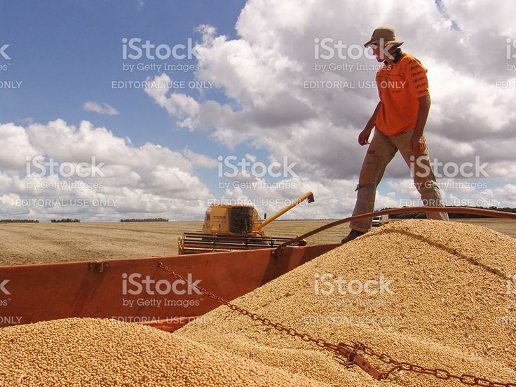 Combining Soybeans royalty-free stock photo
